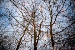 Árboles desnudos reflejados en piscina Imagenes de archivo