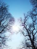 Árboles desnudos sobre el cielo azul foto de archivo libre de regalías
