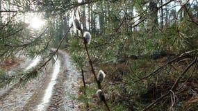 Árboles después de la lluvia Imagenes de archivo
