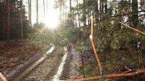 Árboles después de la lluvia Fotos de archivo