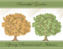 Árboles detallados del resorte y del otoño Foto de archivo libre de regalías