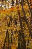 Árboles durante caída foto de archivo