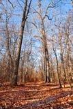 Árboles durante otoño Imágenes de archivo libres de regalías