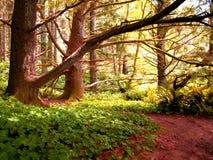 Árboles e hiedra coloridos 530B Fotografía de archivo libre de regalías