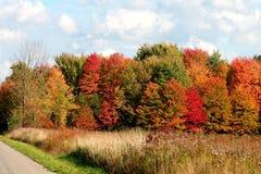 Árboles e hierba del otoño Fotografía de archivo