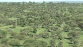 Árboles e hierba en el prado metrajes