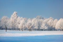 Árboles e hierba helados contra un cielo azul Imágenes de archivo libres de regalías