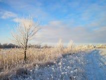 Árboles e hierba Nevado en el prado en invierno, Lituania imágenes de archivo libres de regalías
