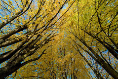 Árboles el caída Fotografía de archivo libre de regalías