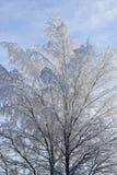 Árboles el invierno Foto de archivo
