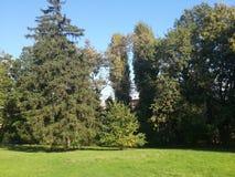 Árboles el parque Imágenes de archivo libres de regalías