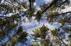 Árboles elevados Foto de archivo libre de regalías
