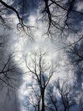 Árboles elevados fotos de archivo