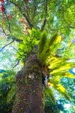 Árboles en árbol Imagen de archivo libre de regalías