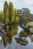 Árboles en área del parque nacional de Kosciuszko Fotos de archivo libres de regalías