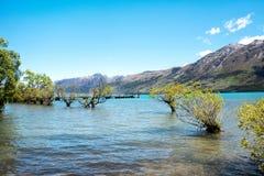 Árboles en agua en Glenorchy, Nueva Zelanda fotos de archivo