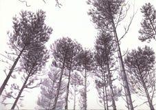 Árboles en Biro Imagen de archivo libre de regalías