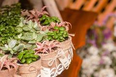 Árboles en bolsos como regalos de boda Imágenes de archivo libres de regalías