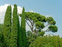 Árboles en bosque Foto de archivo libre de regalías