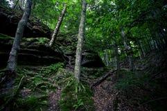 Árboles en bosque Imagenes de archivo