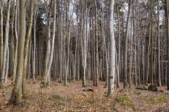 Árboles en bosque Imagen de archivo libre de regalías