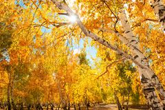 Árboles en bosque del otoño Fotografía de archivo libre de regalías
