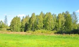 Árboles en bosque del verano Fotos de archivo libres de regalías