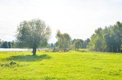 Árboles en bosque del verano Imagenes de archivo