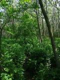 Árboles en bosque en el medio de la trayectoria foto de archivo