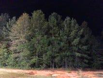 Árboles en bosque en la noche Imagenes de archivo