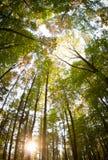 Árboles en bosque negro alemán Fotos de archivo libres de regalías