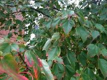 Árboles en caída temprana Foto de archivo libre de regalías