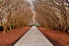 Árboles en camino pavimentado imagen de archivo libre de regalías