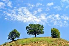 Árboles en campo Imagen de archivo