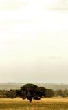 Árboles en campo Fotografía de archivo
