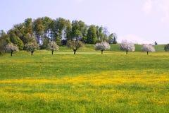 Árboles en campo Imágenes de archivo libres de regalías