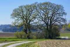 Árboles en campo Fotos de archivo libres de regalías