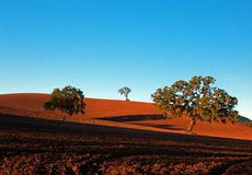 Árboles en campo arado en paisaje del país vinícola de Paso Robles Imagen de archivo libre de regalías