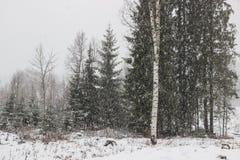Árboles en campo con las escamas de la nieve Imagen de archivo