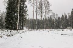 Árboles en campo con las escamas de la nieve Foto de archivo libre de regalías