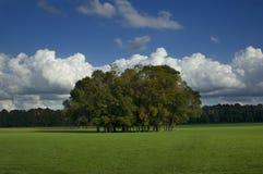Árboles en campo de hierba Imagenes de archivo