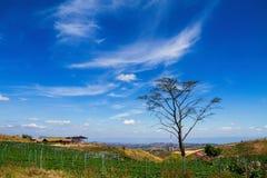Árboles en campo de hierba con el cielo azul arriba Imagenes de archivo