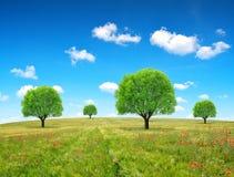 Árboles en campo de trigo Foto de archivo