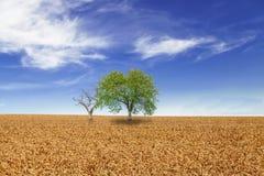 Árboles en campo de trigo sobre el cielo azul nublado Foto de archivo libre de regalías