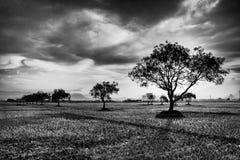 Árboles en campo del arroz Fotos de archivo
