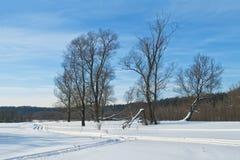 Árboles en campo del invierno Imagenes de archivo