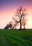 Árboles en campo en la puesta del sol Imagen de archivo