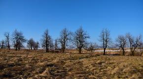 Árboles en campo en montañas Imagenes de archivo