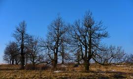 Árboles en campo en montañas Fotografía de archivo