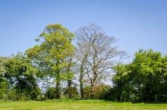 Árboles en campo en primavera Fotografía de archivo libre de regalías